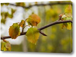 """Постер """"Осенние листья березы""""."""