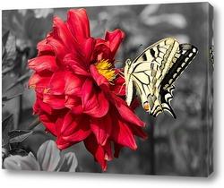 Постер Желтая бабочка на красном цветке