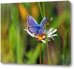 Постер Бабочка на ромашке