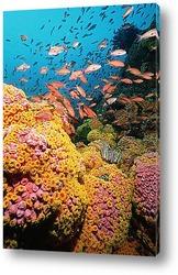 Постер Coral058
