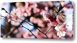 Постер Праздник цветения сакуры