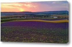 Постер Лавандовое поле на закате