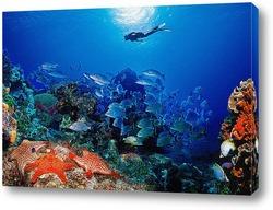 Постер Coral004