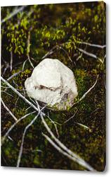 Постер Белый камень в мохе