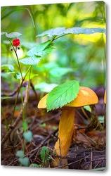Постер Лесной гриб с ягодами костяники