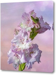 Постер Розово-сиреневый гладиолус на фоне рассветного неба