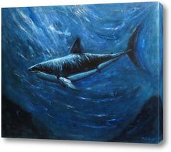 Картина Акула. Подводный мир
