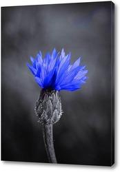 Постер Синий цветочек