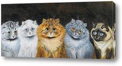 Пять кошек