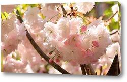 Постер Белоснежная весна