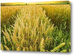 Постер Пшеничное поле