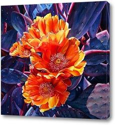 Постер Цветы опунции. Недотроги