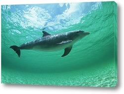 dolphin115
