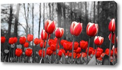 Постер Тюльпаны монохром