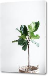 Постер Зелёная жизнь