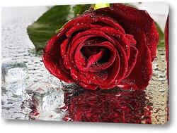 Постер Роза со льдом