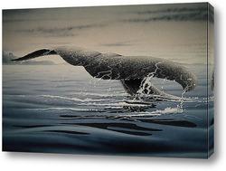 Постер Whale001