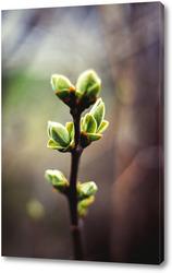 Постер Цветение листыв №2