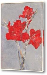 Постер Красный гладиолус