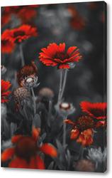Постер Хризантемы