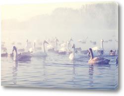 Постер Лебединое озеро
