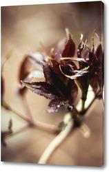 Постер Цветение листыв №4