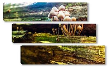 Модульная картина грибы