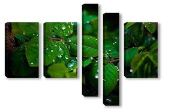 Модульная картина Листья клубники после дождя