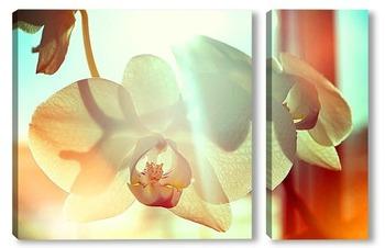 Модульная картина Орхидея в лучах утреннего солнца