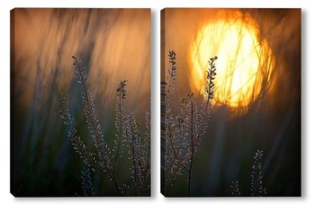 Модульная картина Рассвет сквозь траву