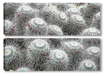 Модульная картина кактуси