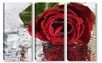 Модульная картина Роза со льдом