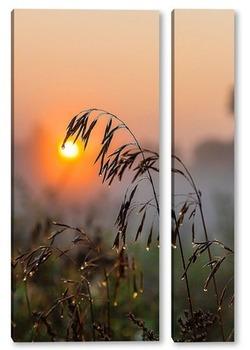 Модульная картина Колос растения на фоне восходящего солнца с каплями росы