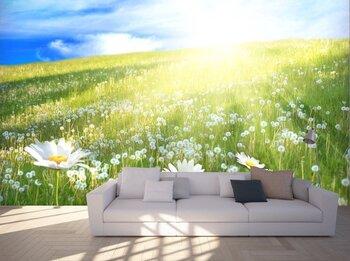 Фотообои Солнечный луг с ромашками и одуванчиками