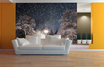Фотообои освещенный лес зимой